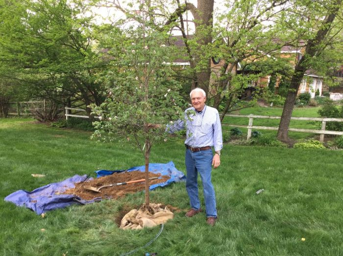 Bill Buick Tree #3